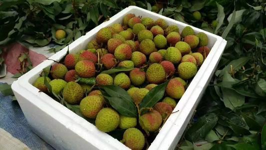荔枝泡沫箱[水果专用