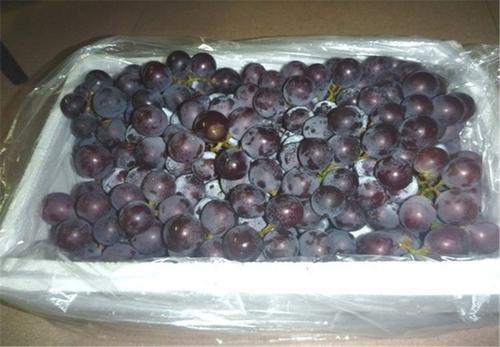 葡萄泡沫箱